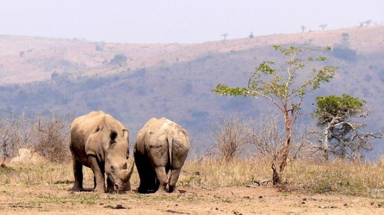 KwaZulu Natal: Safari & Beach