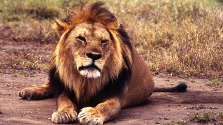 Lake Manyara, Serengeti & Ngorongoro Wildlife Tour