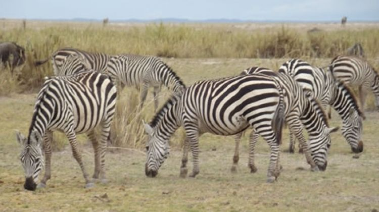 Lake Nakuru Safari Day Trip