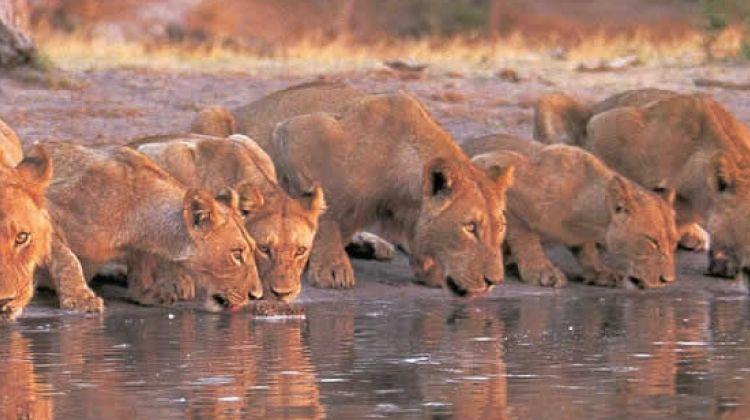 Lake Nakuru Safari Day Trip