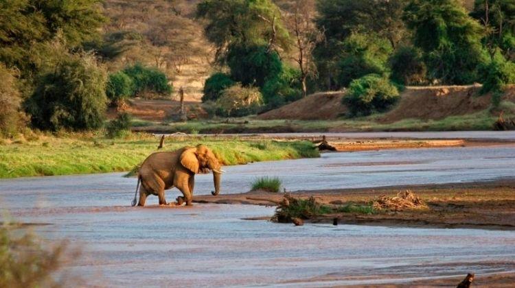 Lakes & Mountain Safari 10D/9N (Masai Mara, Lake Nakuru & Baringo, Samburu, Amboseli)