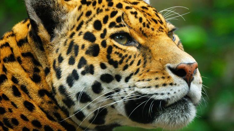 Land of the Jaguar