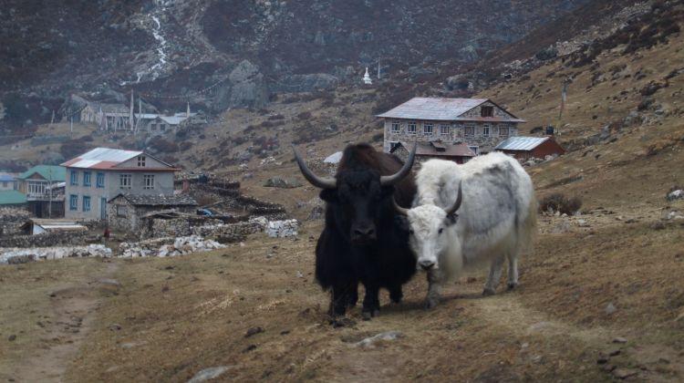 Langtang, Gosainkunda & Helambu Round Trek