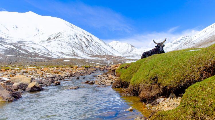 Langtang Valley & Tamang Heritage Trek
