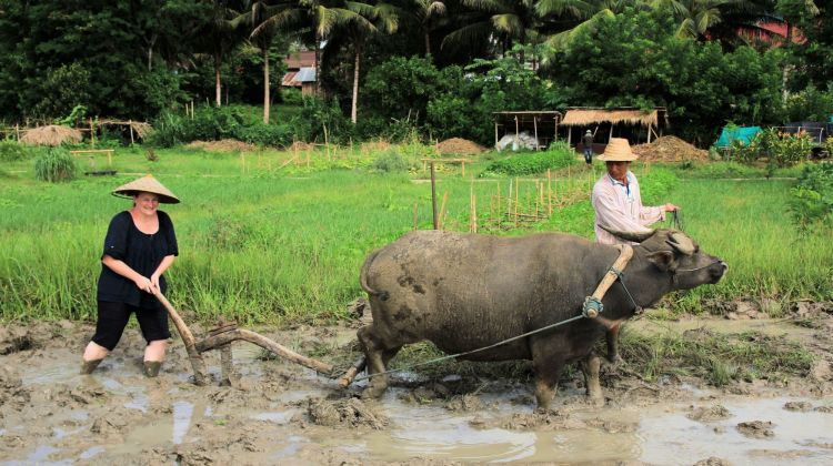 Learn About Rice Cultivation and Cool Down in the Jungle