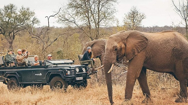 Learn to be a Safari Guide in Kruger National Park