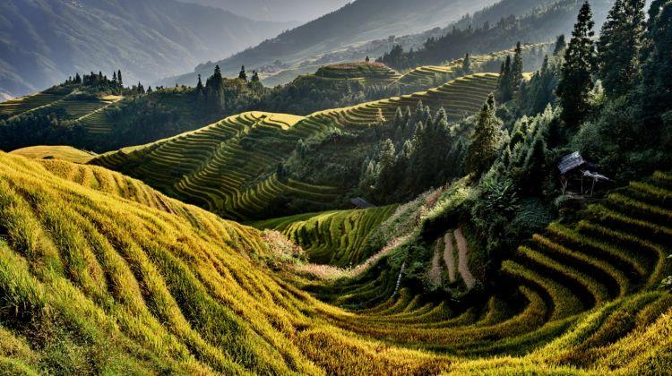 Longji Rice Terraces and Ethnic Villages Tour