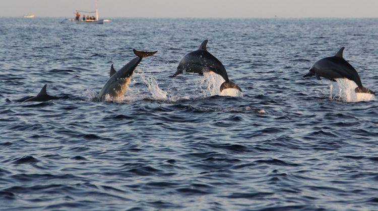 Lovina Sunrise Dolphin Watching Tour