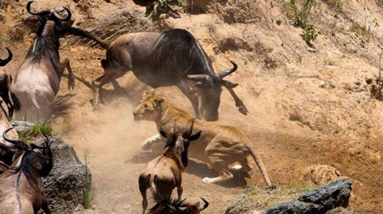Maasai Mara and Lake Nakuru 4 days