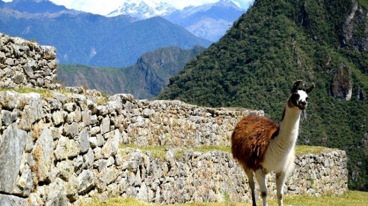 Machu Picchu by Train Adventure