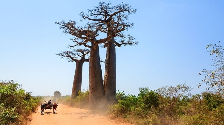 Madagascar: The Lost Continent
