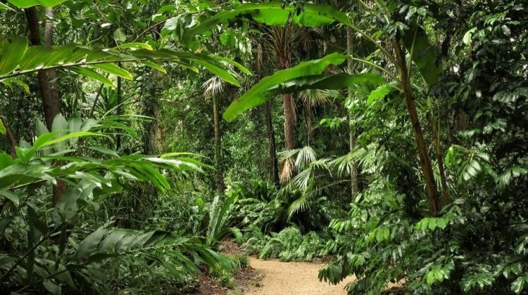 Magnificent Cairns: Food, Nature, Hiking & Dome Climbing