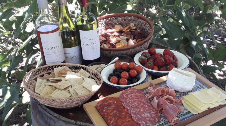 Maipo Valley Wine Tour: Cousino Macul & Aquitania