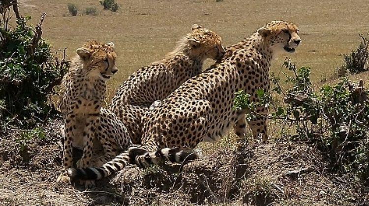 Majestic Masai Mara Safari