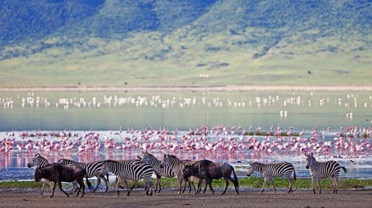Mara & Serengeti