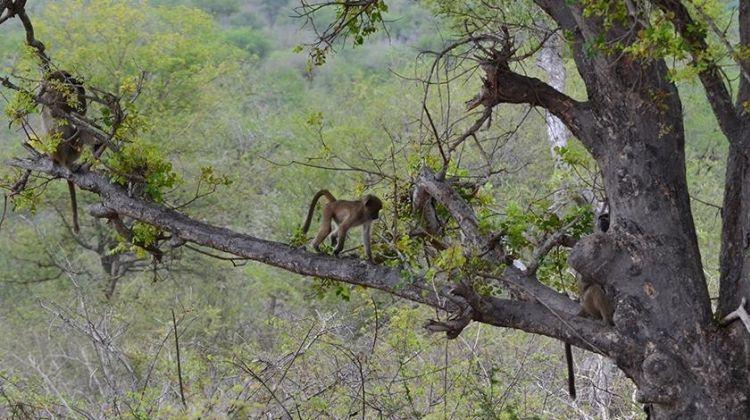 Mara to Victoria Falls