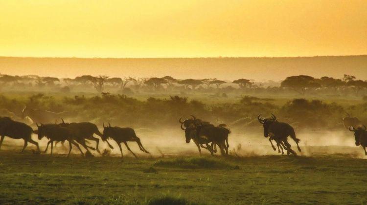 Masai Mara & Uganda Wildlife Safari