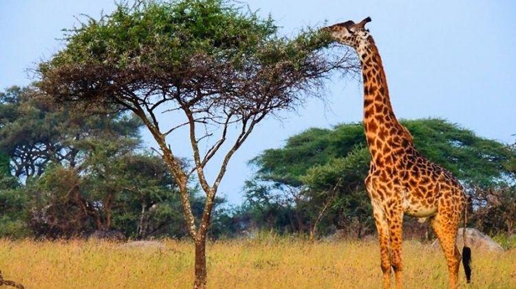 Masai Mara Interactive & Lake Nakuru Safari 4D/3N