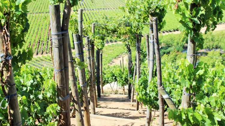 Matetic Vineyard - with outdoor options!