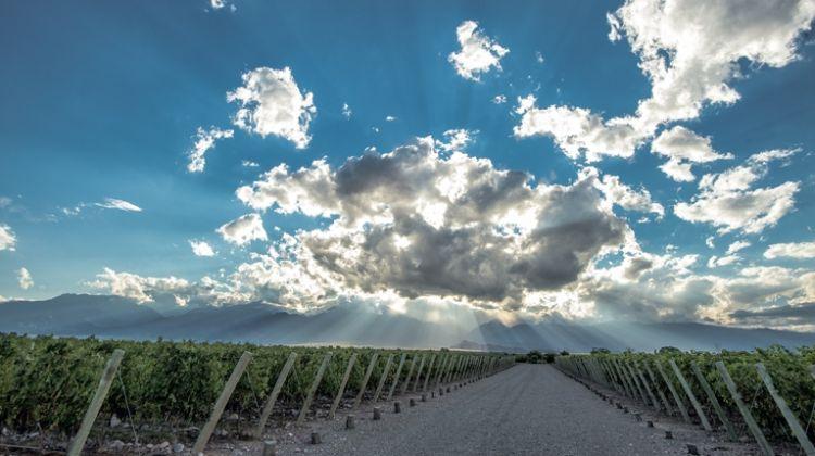 Mendoza, Los Andes and Wines