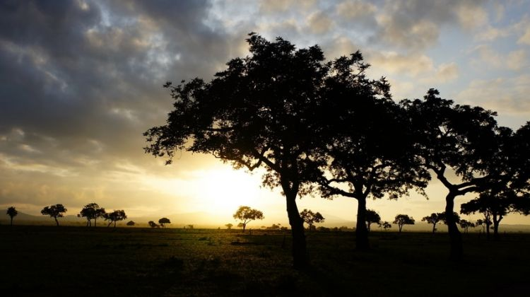 Mikumi National Park Safari