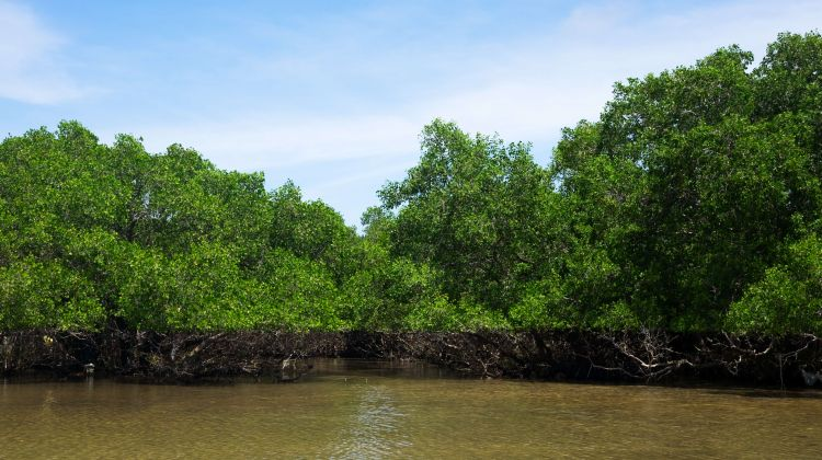 Monkey island & Mangrove Forest Full Day Tour