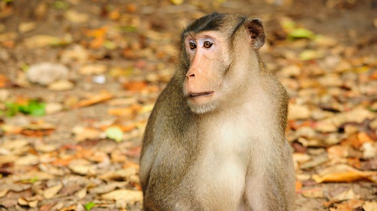 Monkey island & Mangrove Forest Full Day Tour