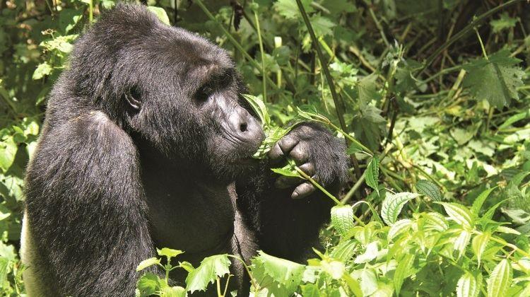 Mountain Gorilla Express 3 Days