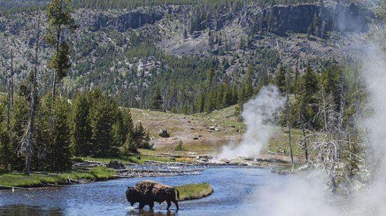 Mt Rushmore to Yellowstone