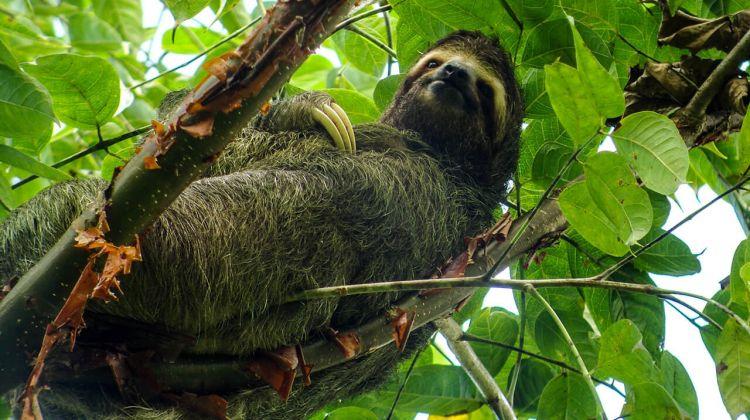 Multi-Sport & Adventure Trip in Costa Rica