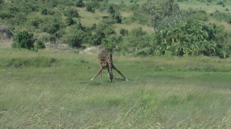Nairobi National Park Safari Tour Morning
