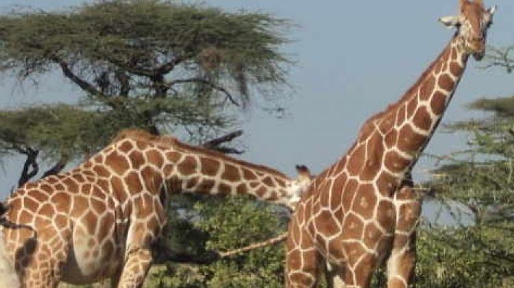Nairobi Tour To Giraffe Center and Karen Blixen Museum