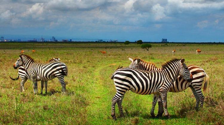 Nairobi Wilderness Safari