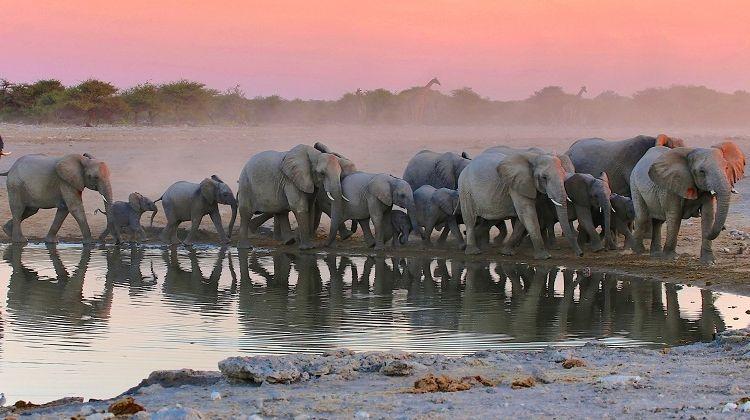 Namibia, Chobe and Vic Falls