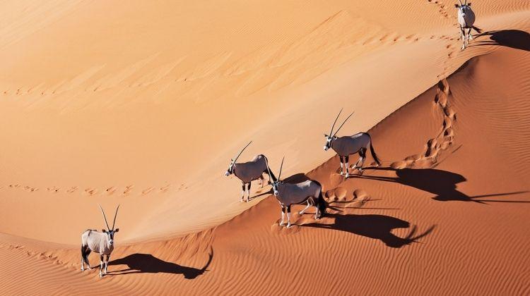 Namibia Explorer