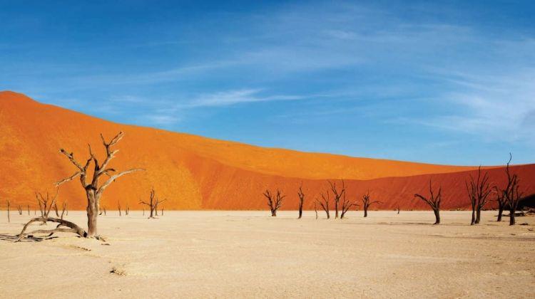Namibia Lodge Safari + Garden Route