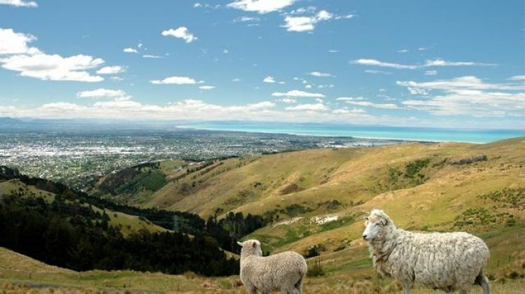 New Zealand–South Island Encompassed
