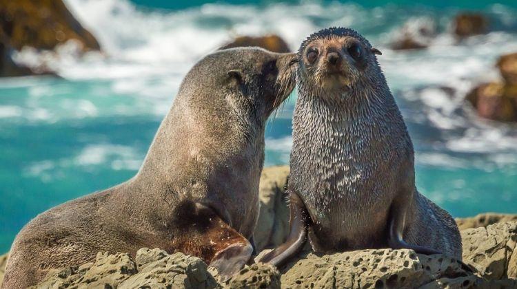 New Zealand whales, birds and wildlife