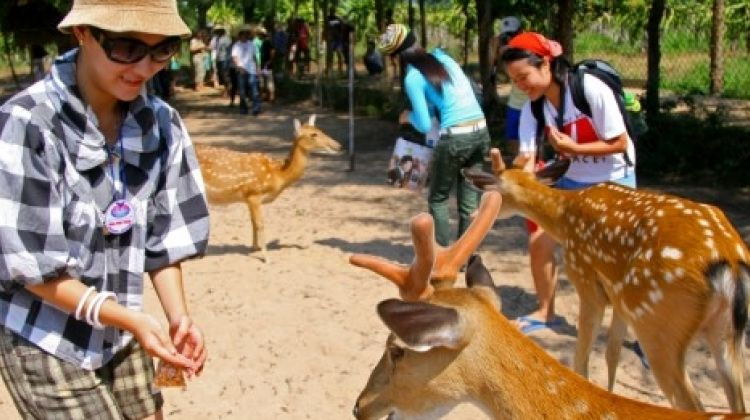 Nha Phu Bay discovery