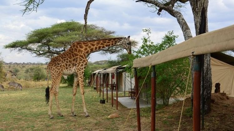 North Tanzania Camping & Lodge Safari