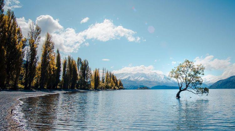 NZ Intro South