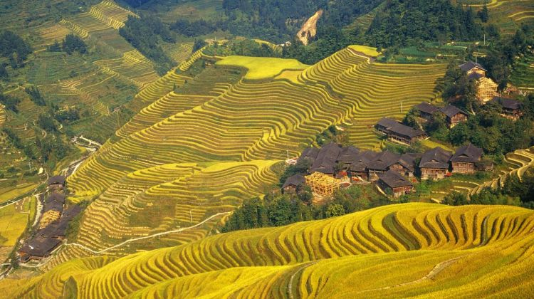One Day Longji Rice Terraces Group Tour