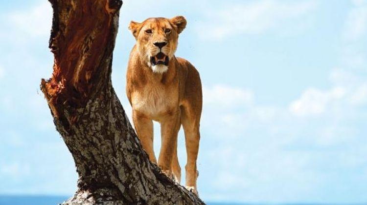 One Day's Safari in Lake Manyara National Park