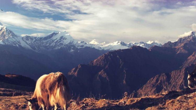 One Week in Nepal