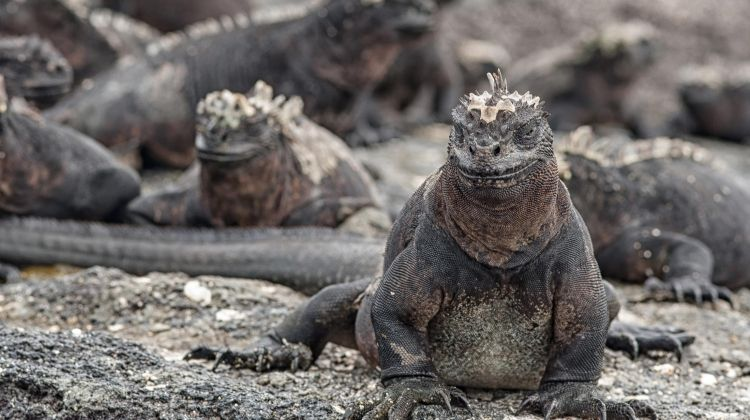 One Week in the Galapagos Islands