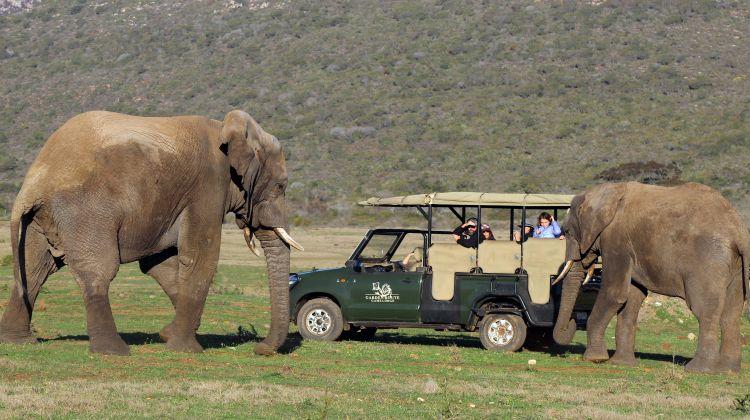Overnight Safari at Garden Route Game Lodge
