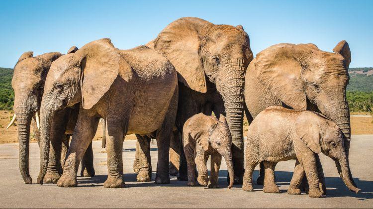 Overnight Safari to Aquila Game Reserve