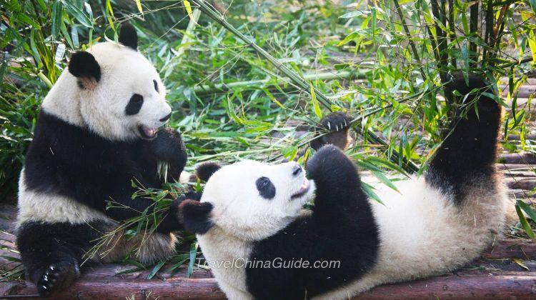 Pandas & Golden Cities in China - No Shopping Stops