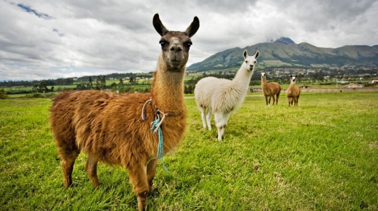 Peru Family Holiday with Teenagers