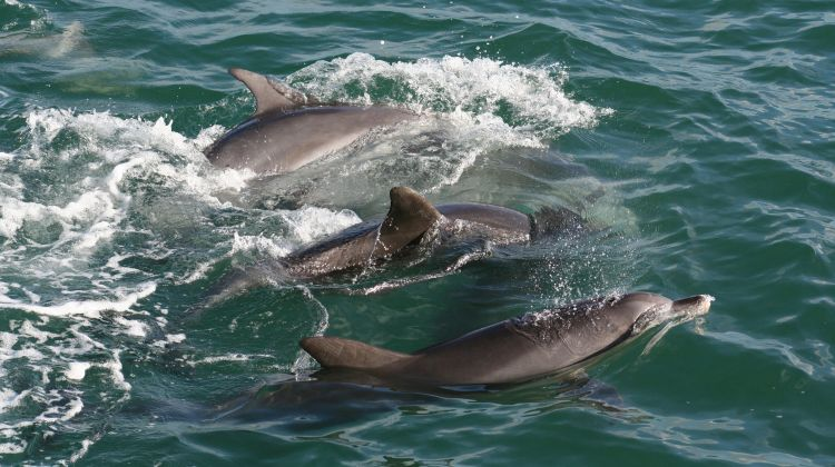 Port Stephens Wildlife, Dolphins and Dunes Tour